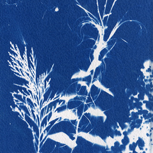 cyanotype photography